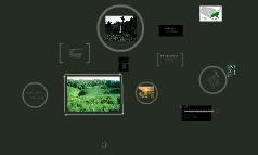 Invasive Plant Species-kudzu