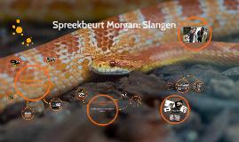 Spreekbeurt Morgan: Slangen