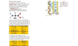 Eiwitten; bouw en functie