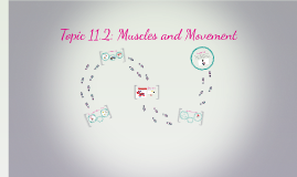 Topic 11.2 Muscles and Movement