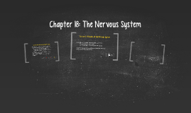 Chapter 18: The Nervous System