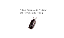 Pill Bug Response to Predator and Movement by Pilling