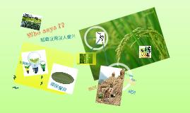 Copy of 有機稻場