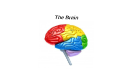 Copy of The Brain