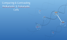 Comparing & Contrasting Prokaryotic & Eukaryotic Cells