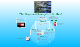 Copy of Capture/Recapture method