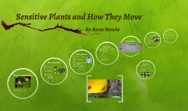 Sensitive Plants and How They Move