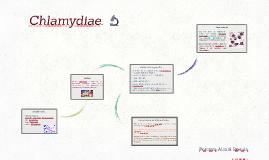 Chlamydiae