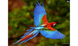 Chapter 1 Lesson 5 Animal Systems