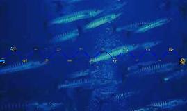 Fiziologija dubinskog ronjenja