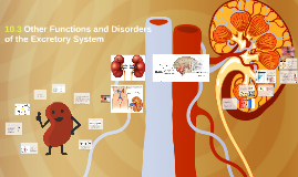 10.3 Other Functions and Disorders of the Excretory System