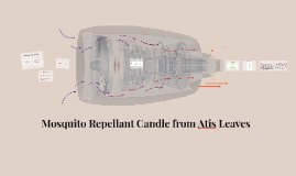 Mosquito Repellant Candle from Atis Leaves