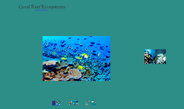 Coral Reefs Informative Speech Visual Aid