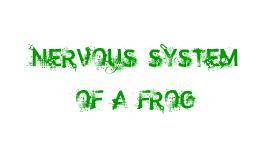 Copy of Nervous System Of A Frog