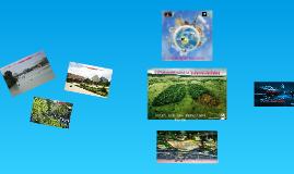 Copy of Estrategias para la Sustentabilidad
