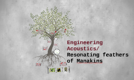 Engineering Acoustics/Resonating feathers of Manakins