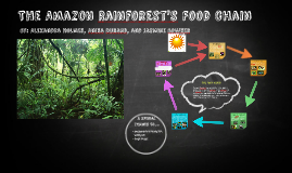Copy of The Amazon Rainforest's Food Chain