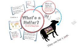 Why Heifer?