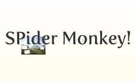 SPider MONEKY