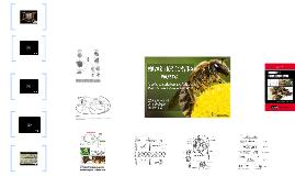 A vida das abelhas na colmeia