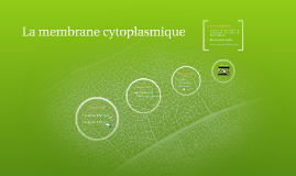L'ultrastrcture cellulaire