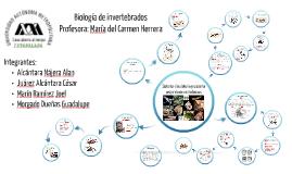 moluscos (sistema respiratorio y circulatorio)