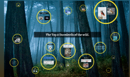 Copy of The Top 10 Daredevils of the wild.