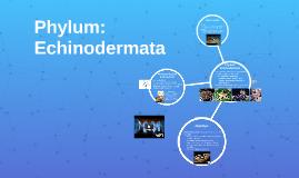 5-06: Phylum: Echinodermata