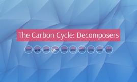The Carbon Cycle: Decomposers