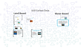 6.05 Carbon Cycle