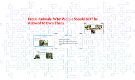 Exotic Animals: Why Peolple Should NOT be Allowed to Own The