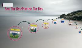 Sea Turtles/Marine Turtles