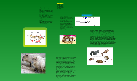 Rodentia: Evolution of a Species Presentation