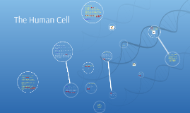 The Human Cell