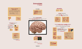 Copy of Neurosexismus