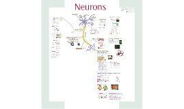 AP Bio- Communication 4: Neurons