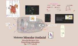 Sistema Múscular Orofacial