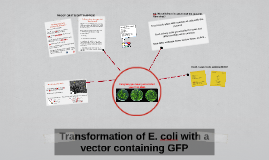 Transformation of E. coli with a vector containing GFP