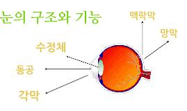 눈의 구조와 기능
