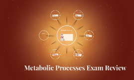 Metabolic Processes Exam Review
