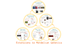 AP Bio- Information 10:  Extensions to Mendelian Genetics