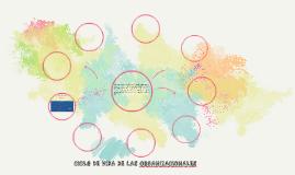 CICLO DE VIDA DE LAS ORGANIZACIONALES