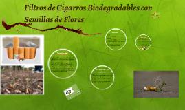 Copy of Filtros de cigarros Biodegradables