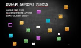 REcap: Muscle fibres