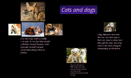 Cats / Kittens & Dogs / Puppies
