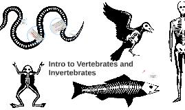 Intro to Vertebrates and Invertebrates