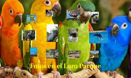 Fotos en el Loro Parque