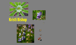 Bishop Introduction