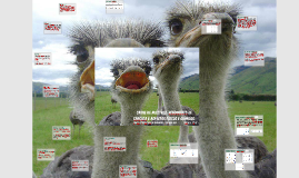 Carne de avestruz: rendimento de carcaça e aspectos físicos