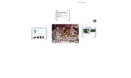 Gato montés (Oncifelis geoffroyi)